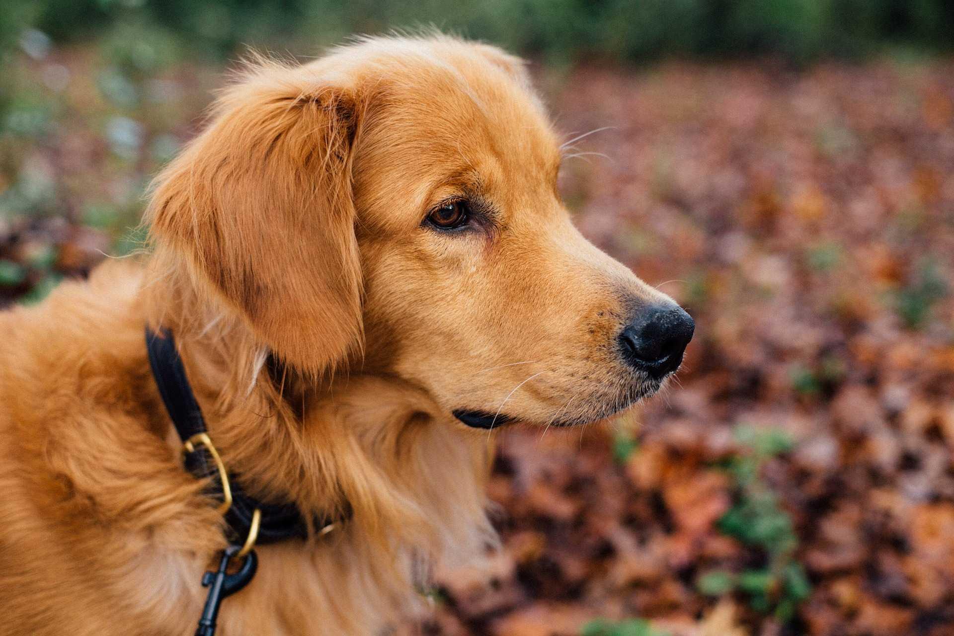 Come scegliere il guinzaglio più adatto al cane