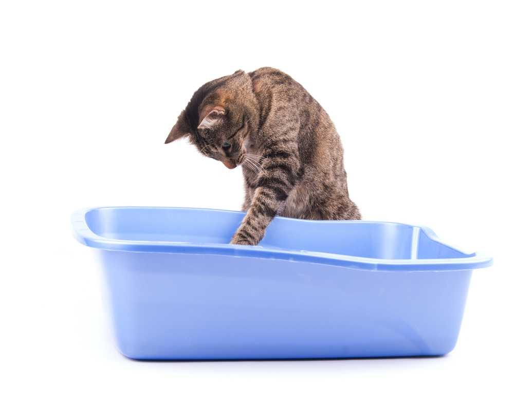 Come scegliere la lettiera migliore per il nostro gatto