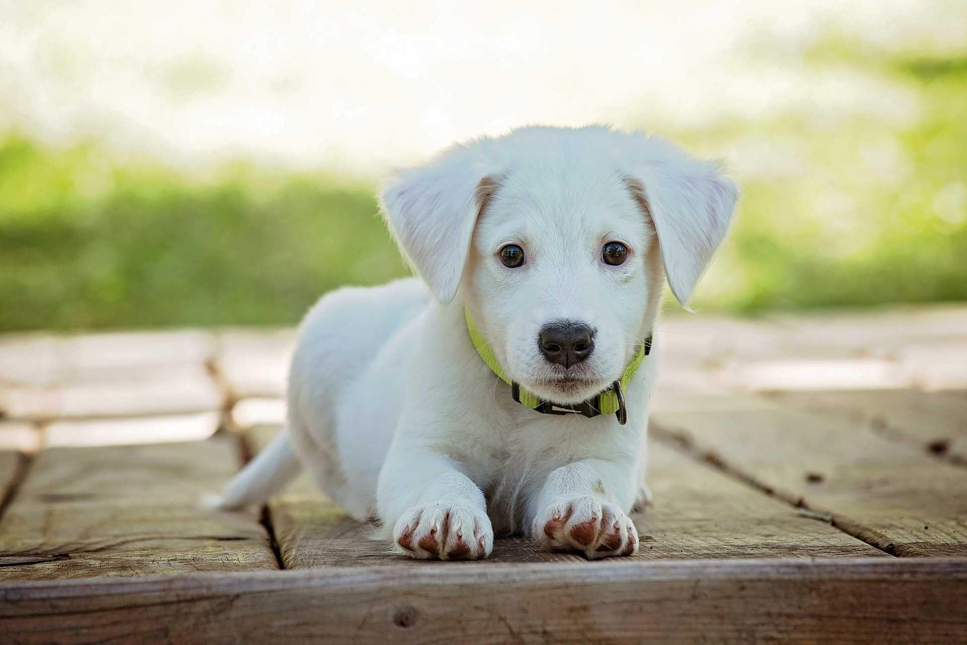 Cane, come scegliere quello ideale per noi